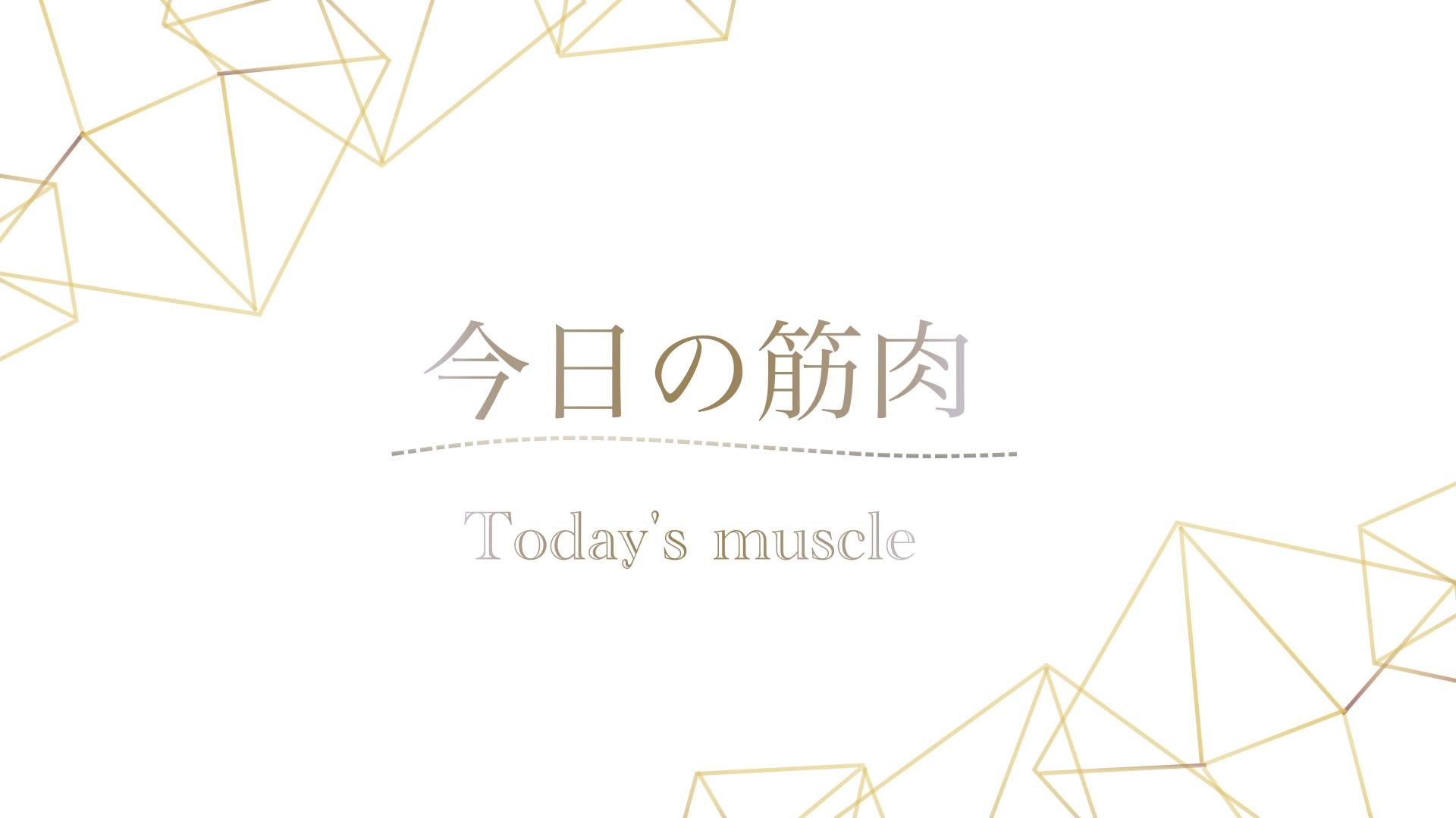 https://medical-seitai-academy.com/wp-content/uploads/2021/09/今日の筋肉.jpg